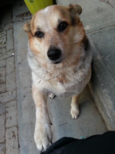 Hostal owner's dog, Lola begin sweetheart