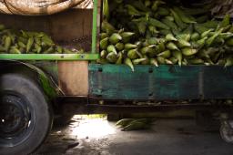Corn and Cement: The Taste of Monterrey